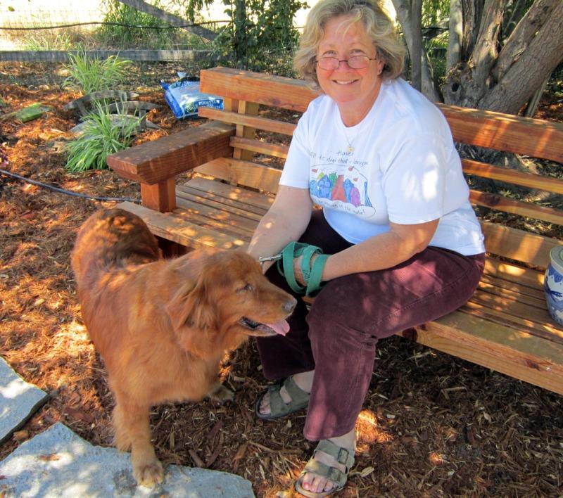 Dog Rescues Near Matlock