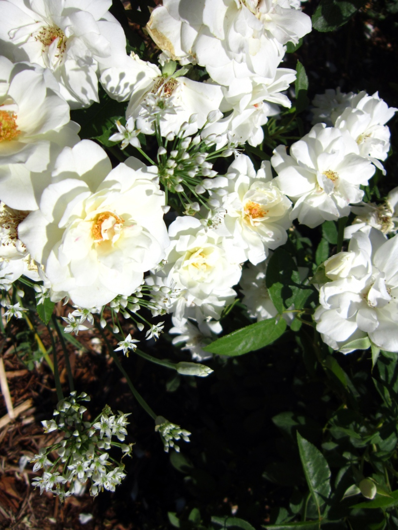 White-Garden