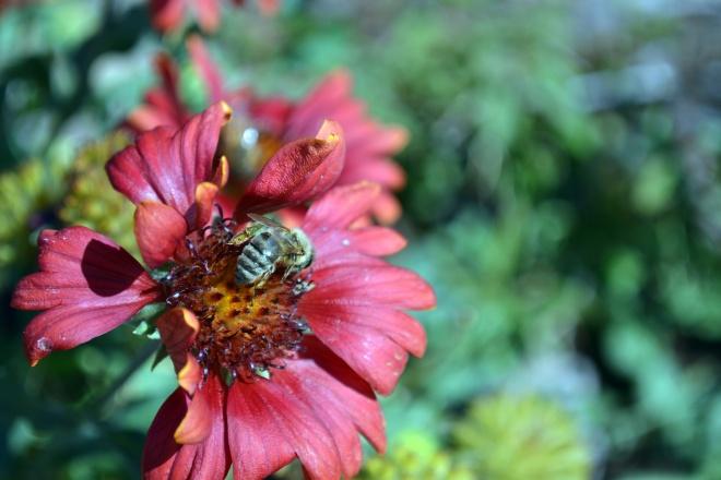 Bee2-9_12