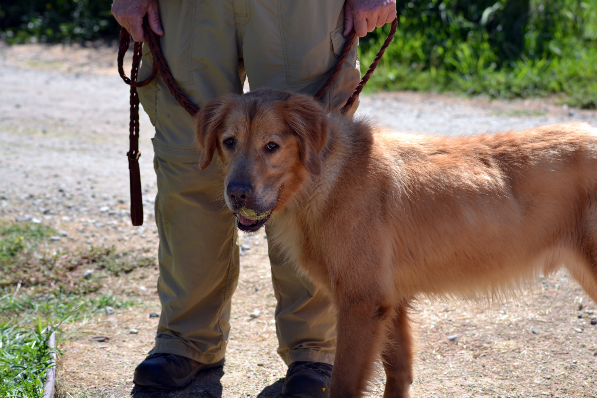 Image Result For Bringing Dogs In