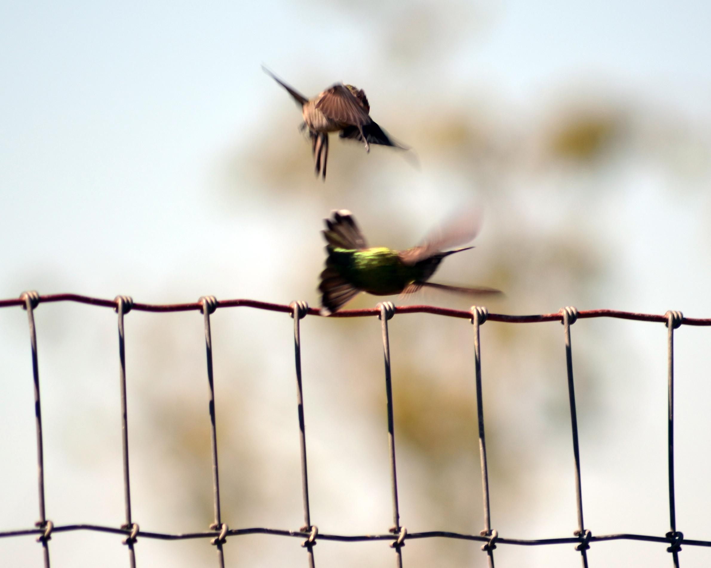 Hummingbird Sanctuary Long Island Ny