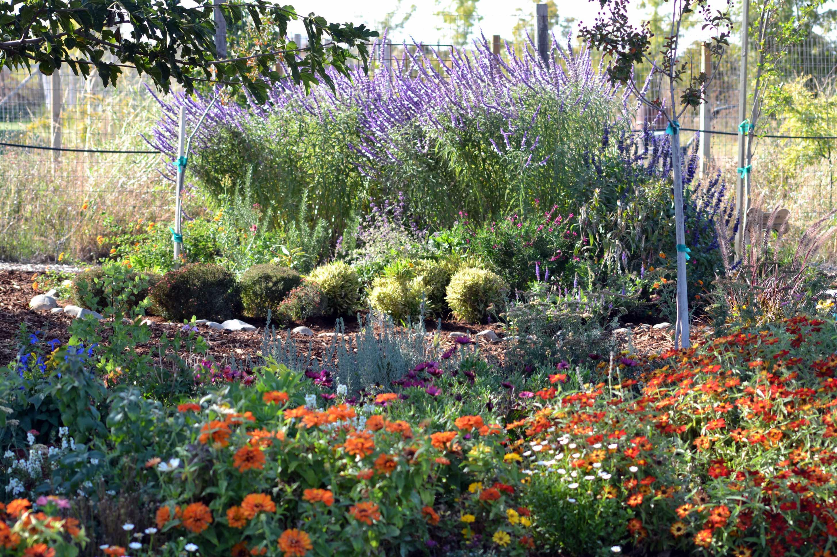Still Planting Still Rescuing Gardens For Goldens