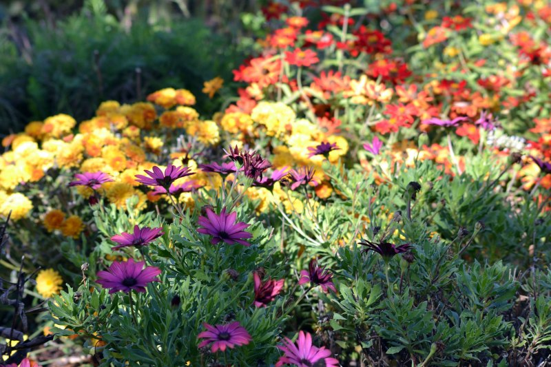 Perennial-Garden-Fall-Color