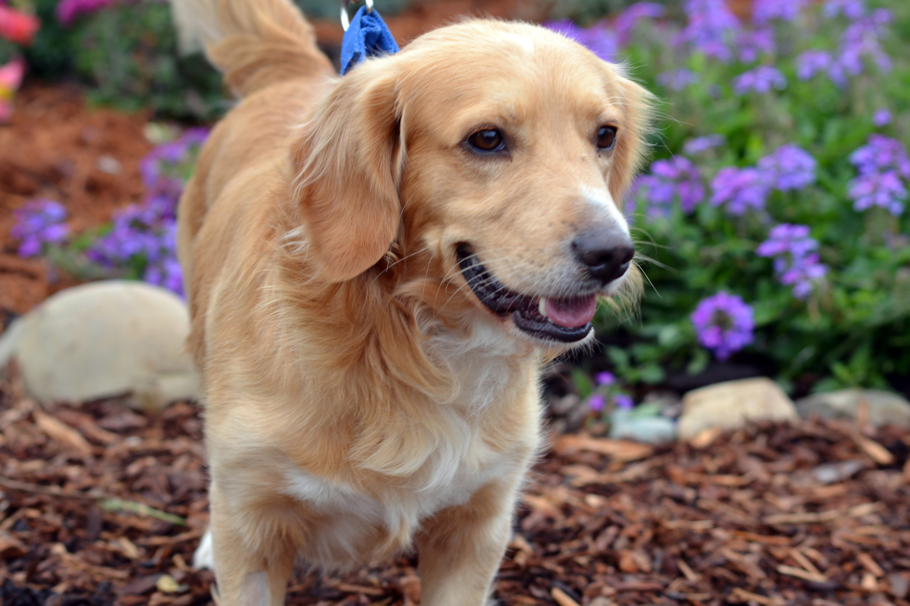 Can Dogs Recovering From Seizure Have Diarrhea