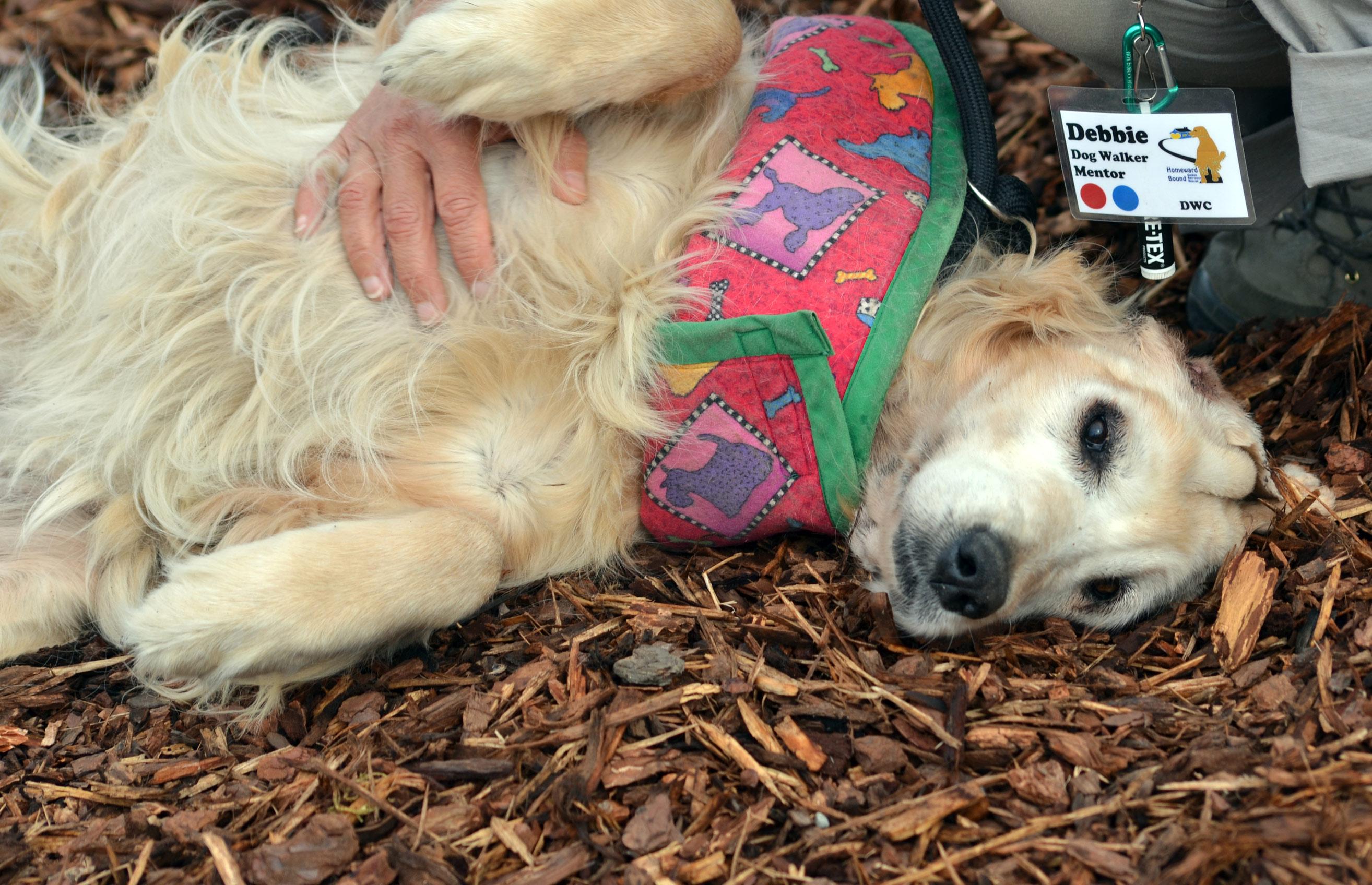 Rescue Dog Still Shakes  Months After Adoption