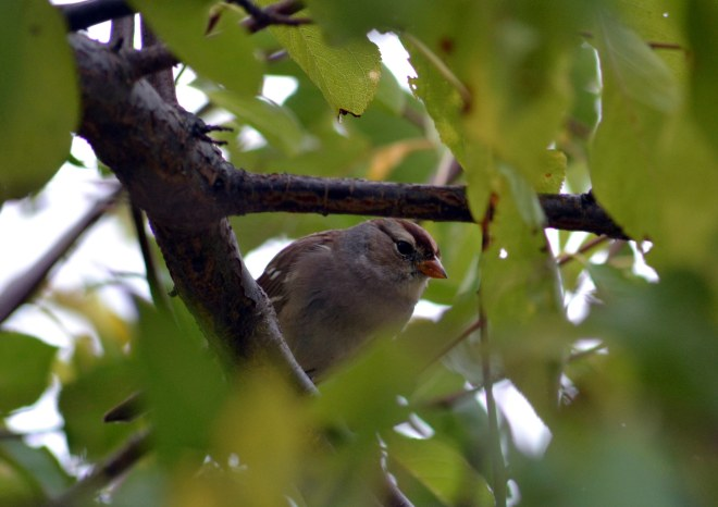 Bird_11