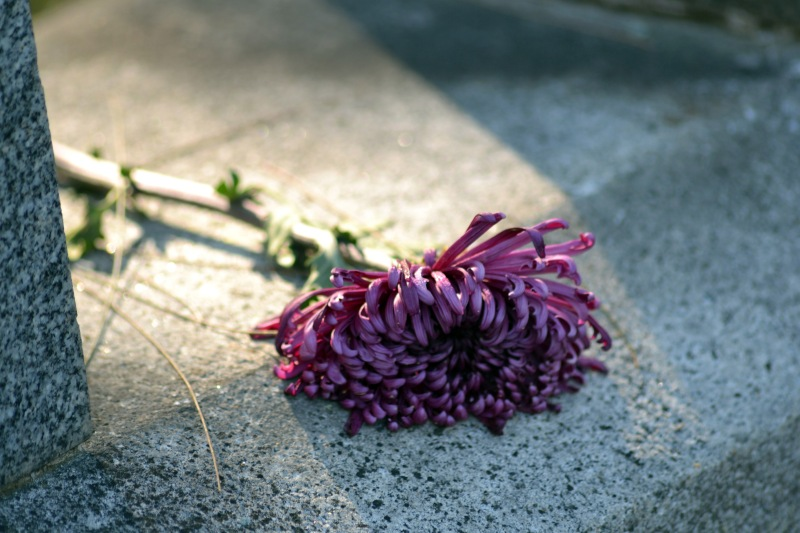 Flower_on_stone_cemetery