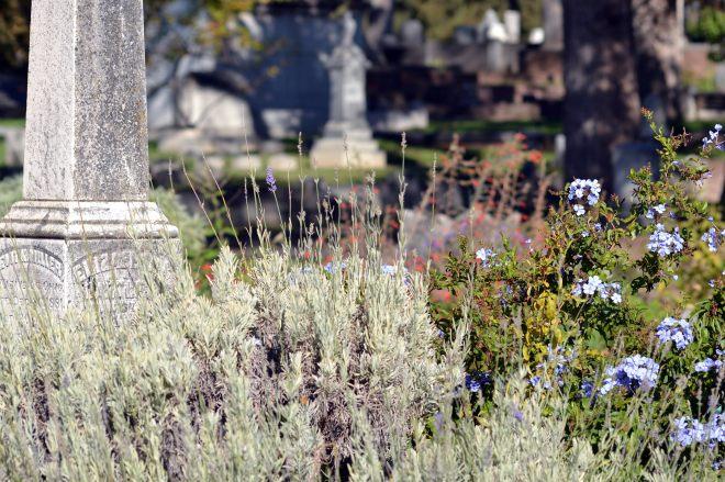 Lavender_Cemetery