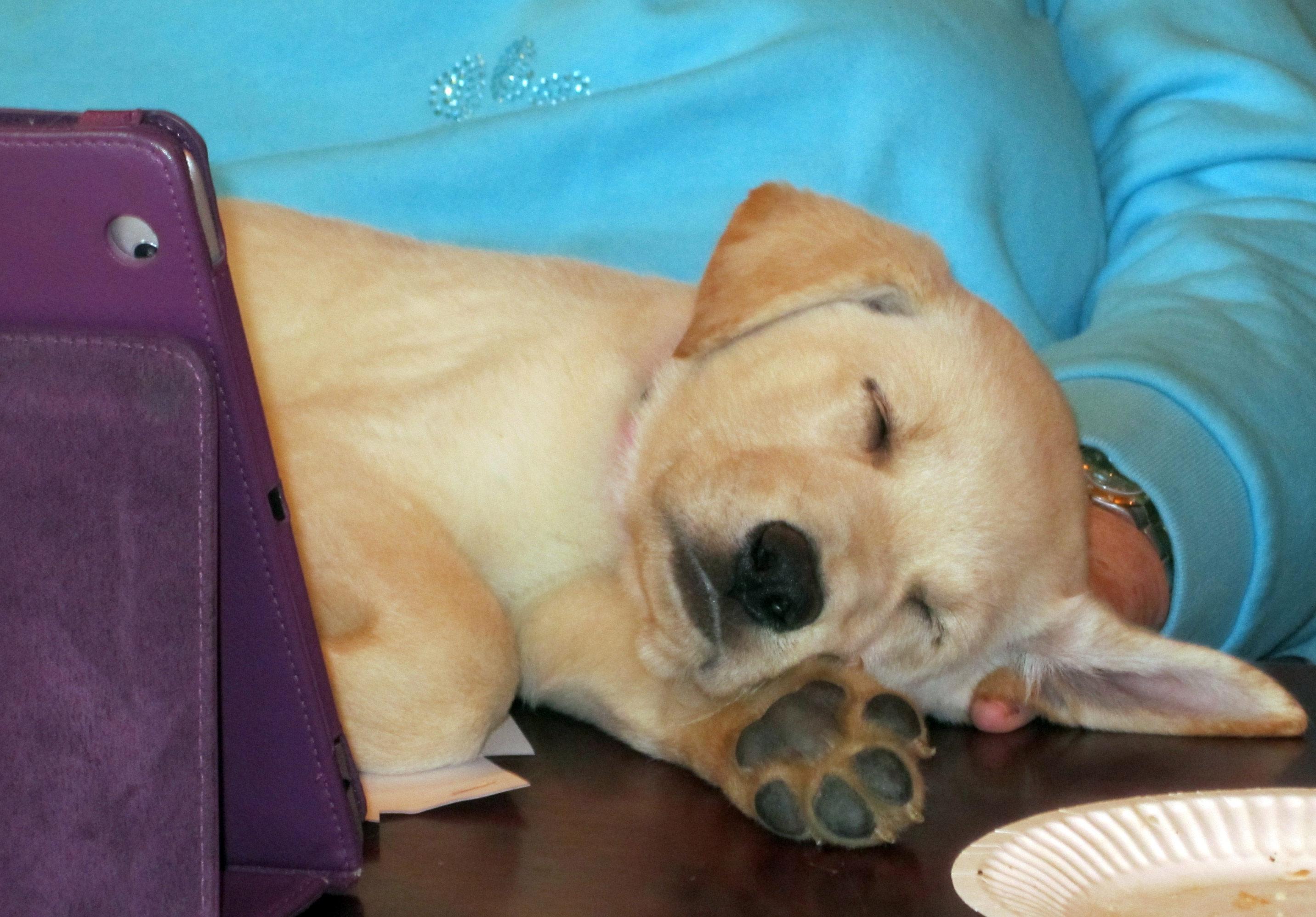 Marcela S Dog Gained   Kilograms