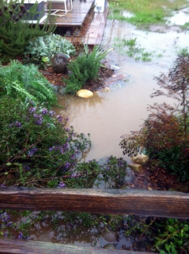 Soaked Garden5_11