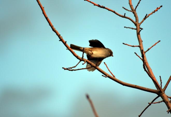 Bird_Sky_12