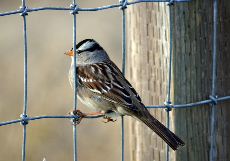 Bird_Wire_12