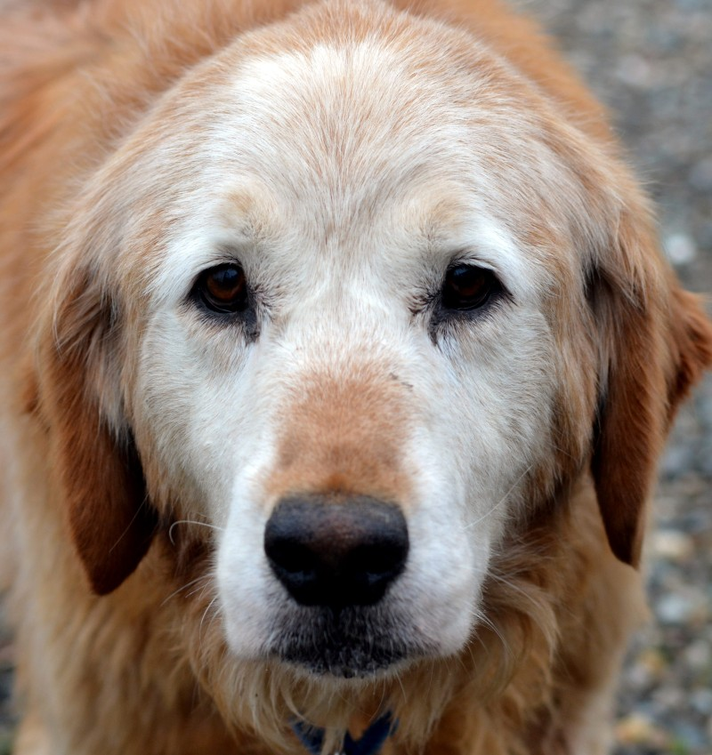 Old-Pup
