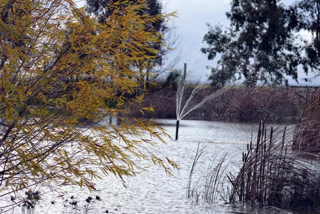 Pond1_12