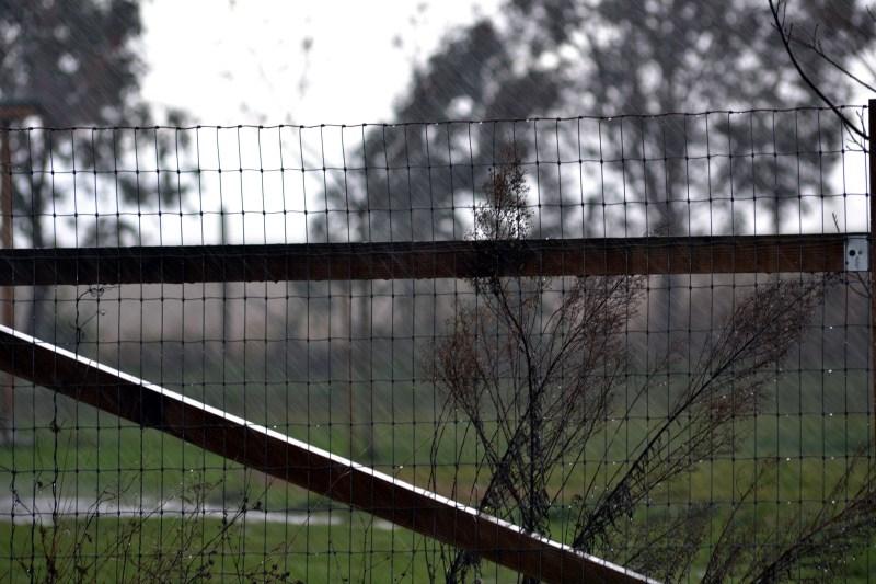Rain_12