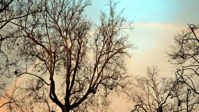Rainbow1_12