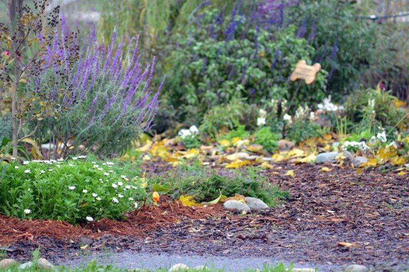 Soaked-Garden6_12