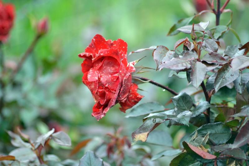 Soaked-Garden9_12