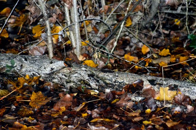 Winter-Fallen-branch