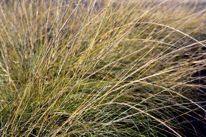 winter-grass