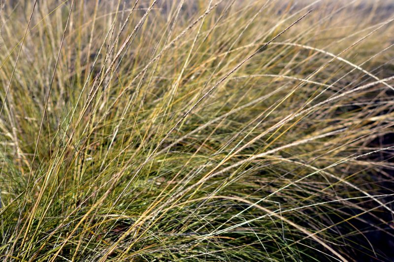 winter-grass