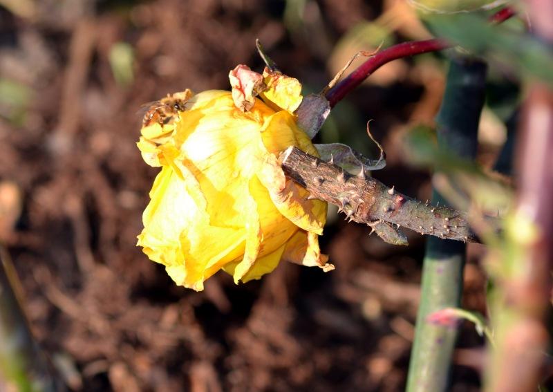Bee_Winter
