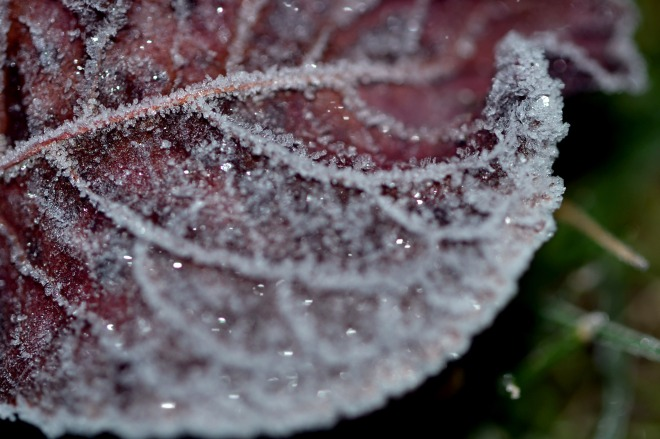 Leaf_Frost_1_13