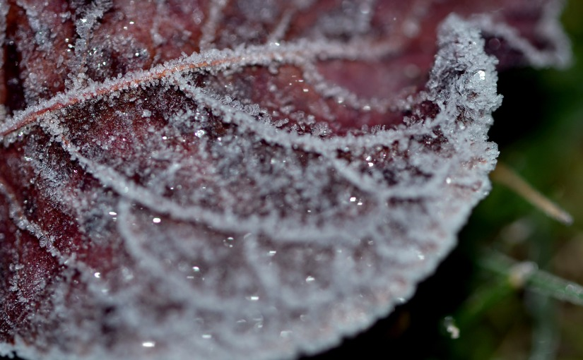 A Welcome Frost