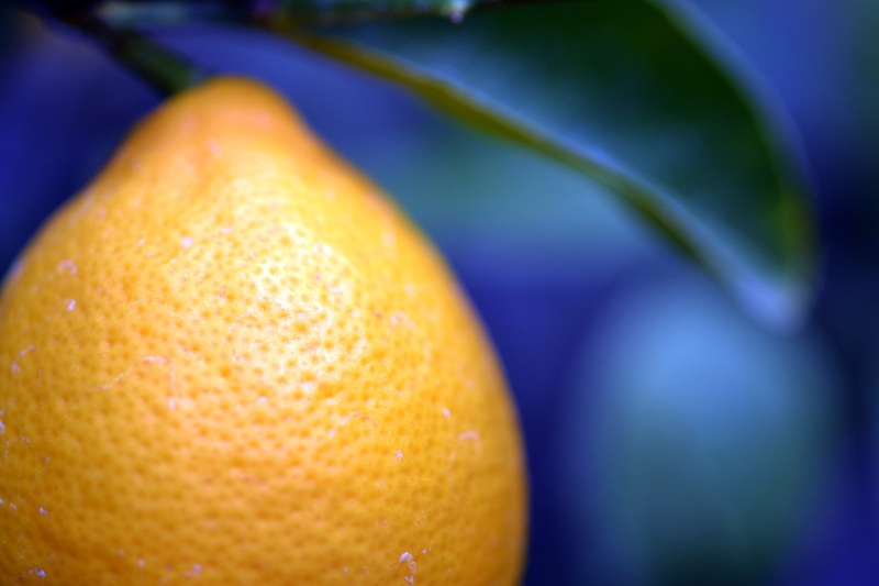 Lemon-detail-1_13