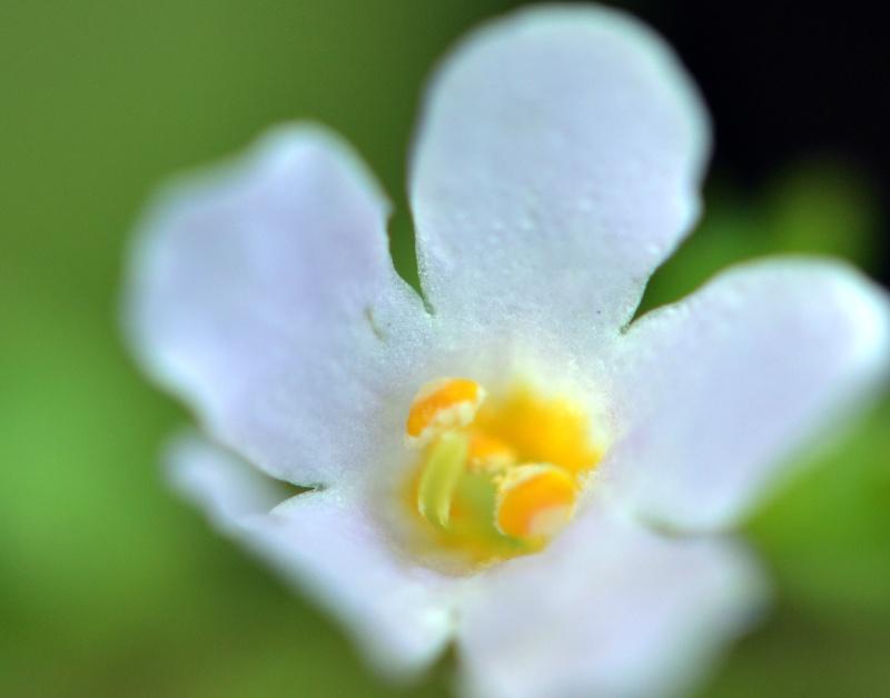 White-Flower_1_13