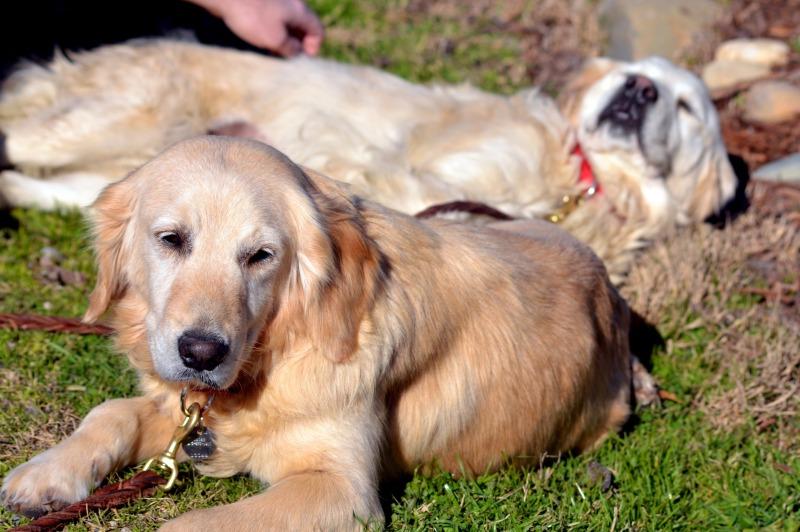 Breeder-Pups-23_2_13