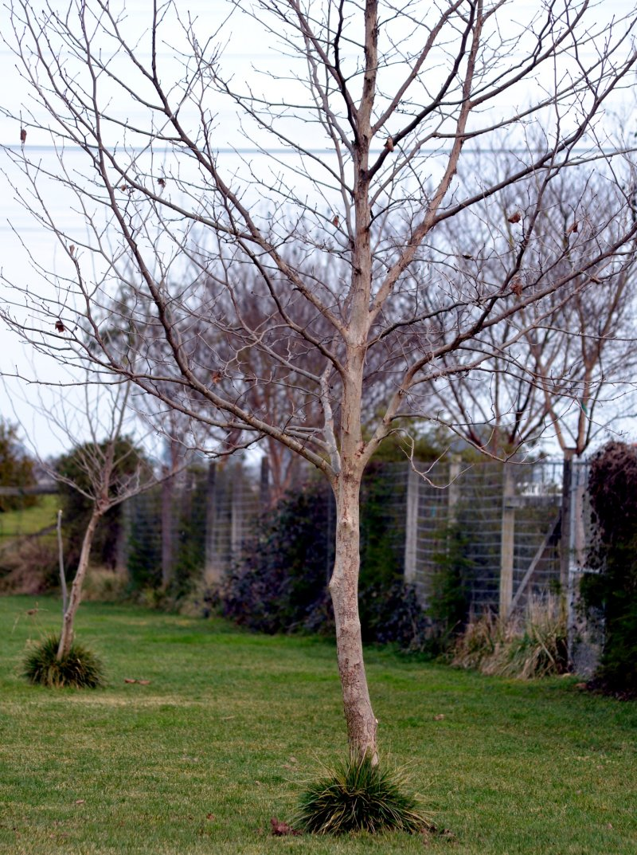 Trees-Weeds-2_13