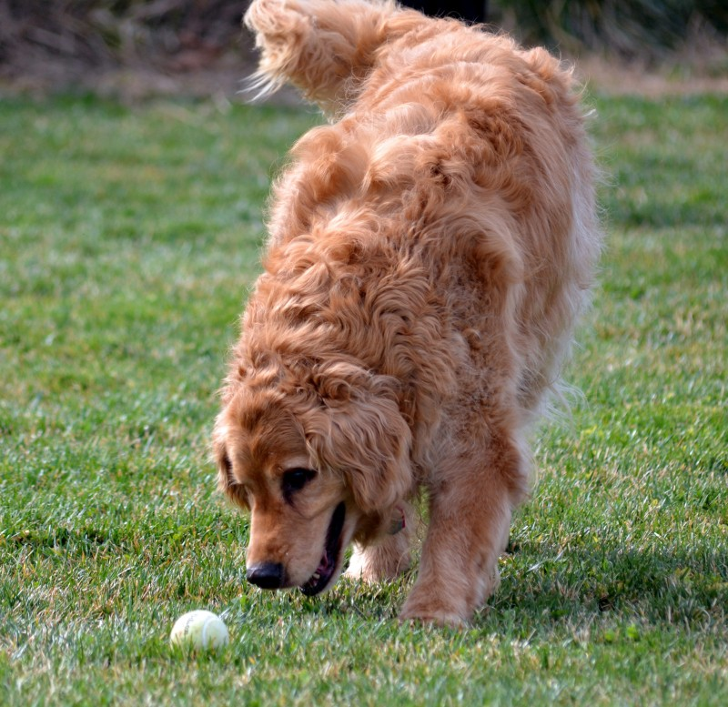 Bogey-Ball-2