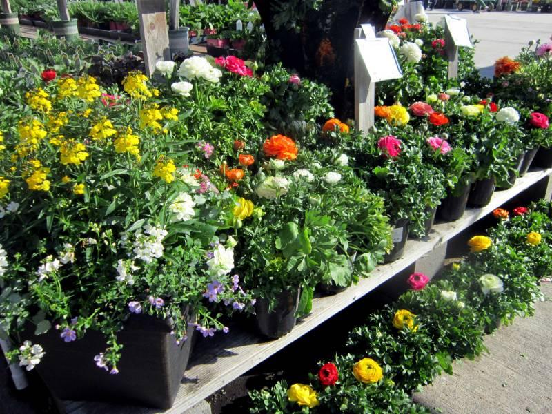 Flower-Store