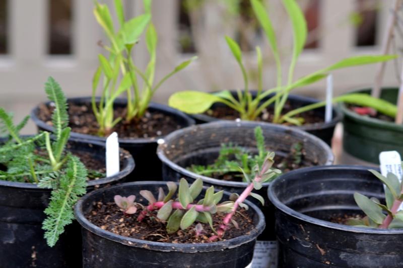 New-Plantings