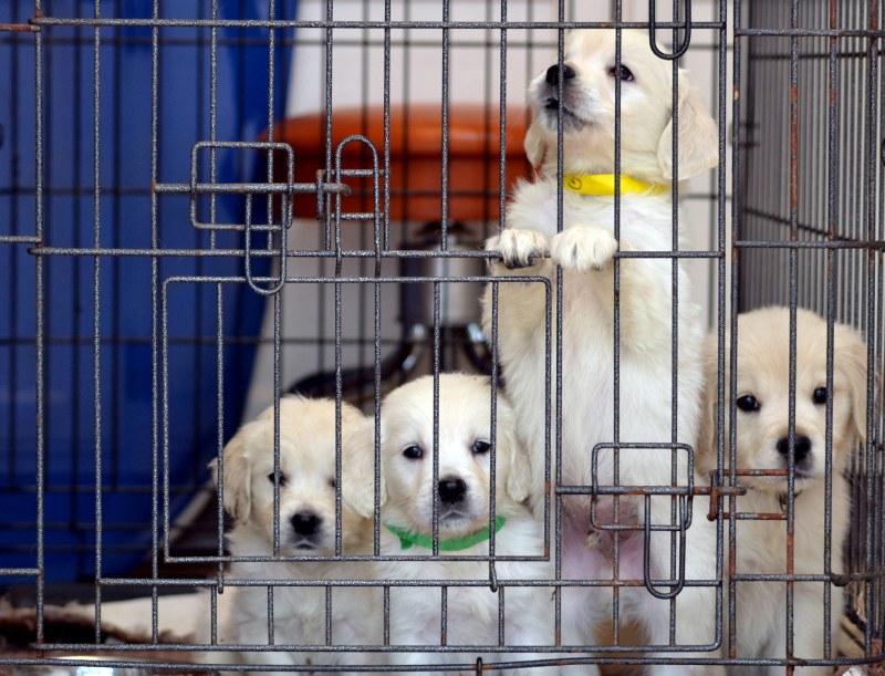 Puppies10_3_13