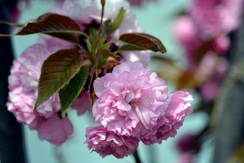 Spring-Blossom2_3_13