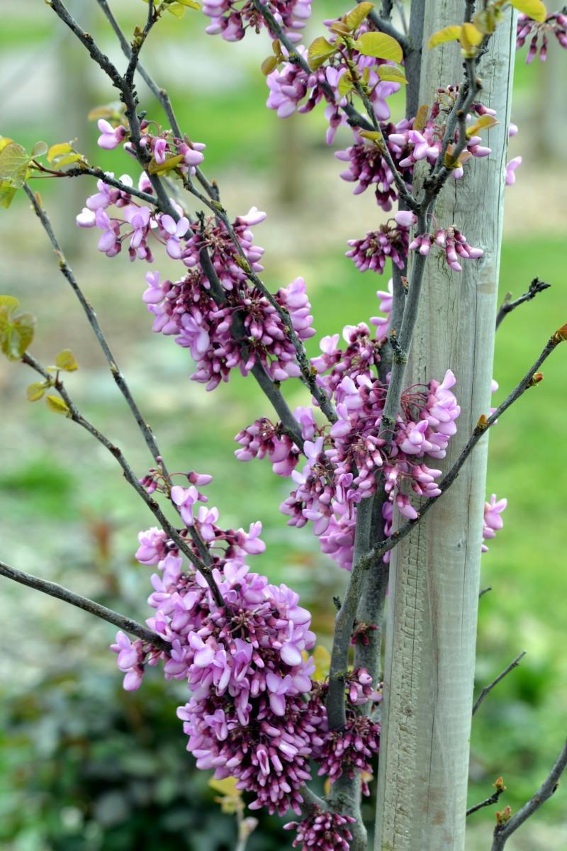 Spring-Blossoms