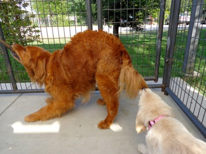 Beatrix-Charlie-Tail