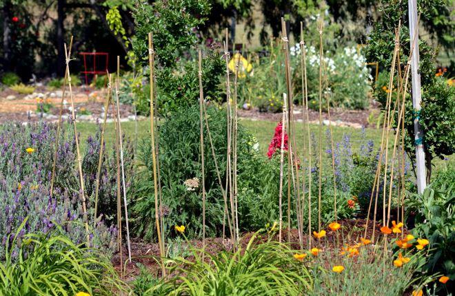 Dahlias-Planted-1_4_13