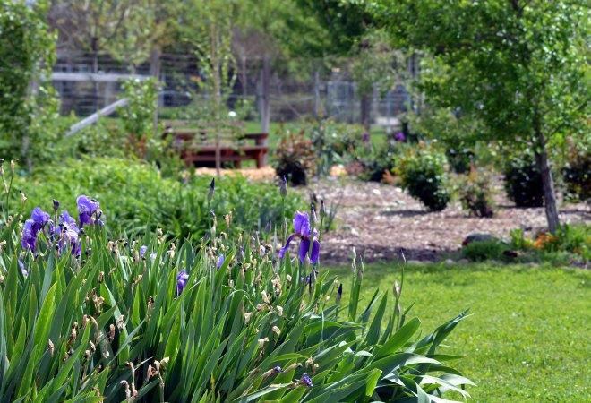 Garden3_4_13