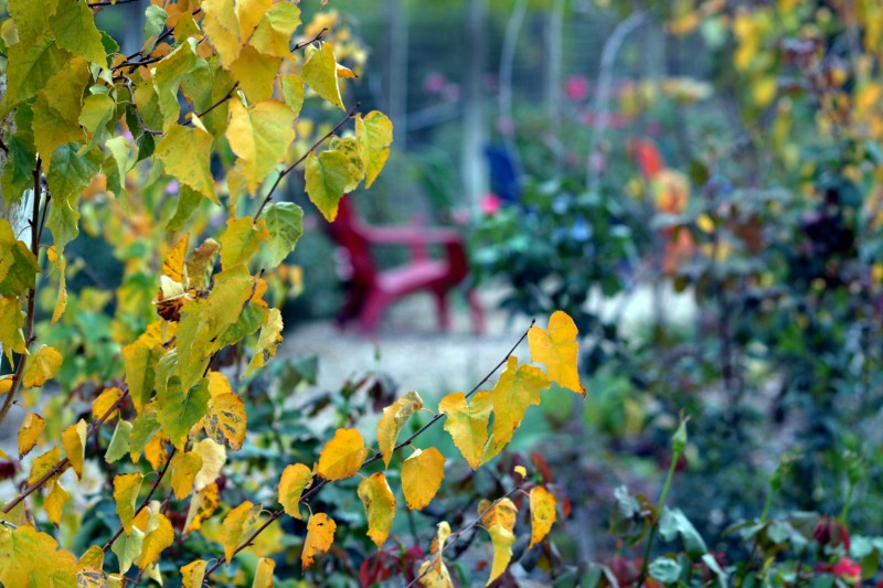 Garden_Fall
