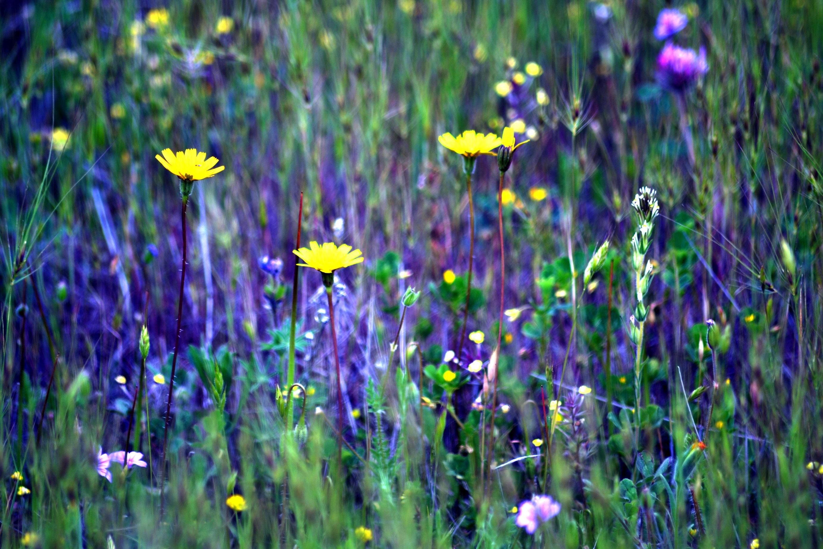Flower gardens wallpaper - The Meadow Gardens For Goldens