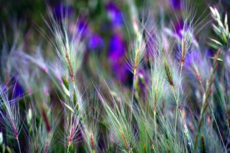 Meadow_2