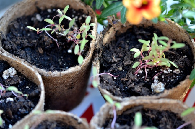 seedlings_2