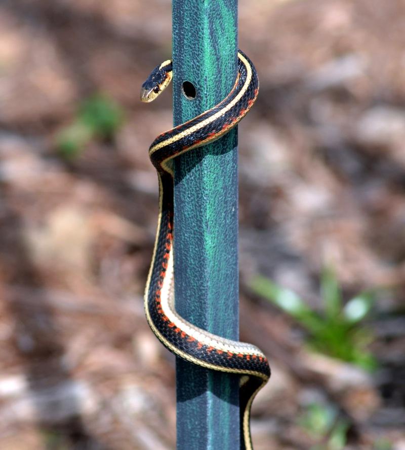 Snake-4_13