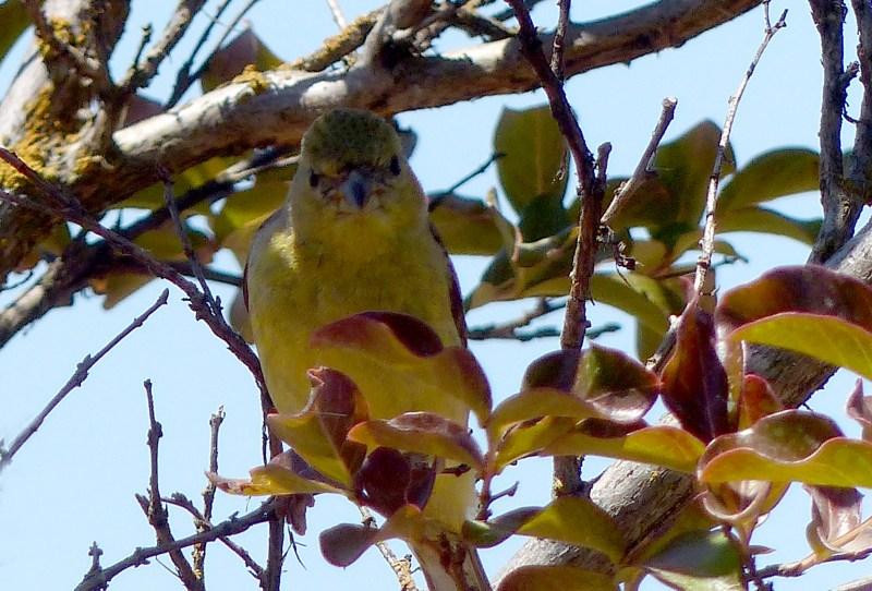 Bird-Tree-5_13