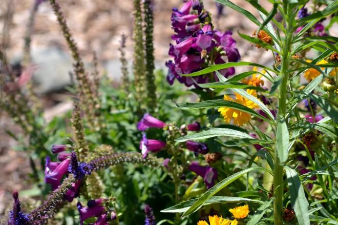 Butterfly-Garden-5_24_13