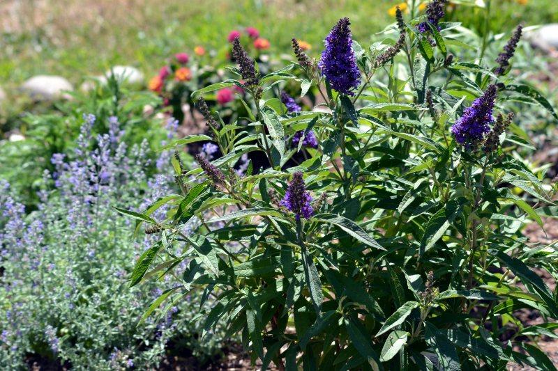 Butterfly-Garden2-5_24_13