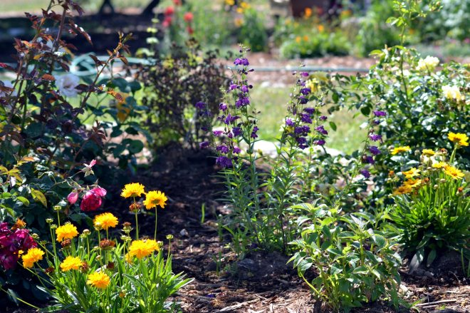 Butterfly-Garden3--5_24_13
